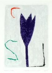 Paarse Tulp
